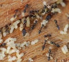 شركة مكافحة حشرات بحائل